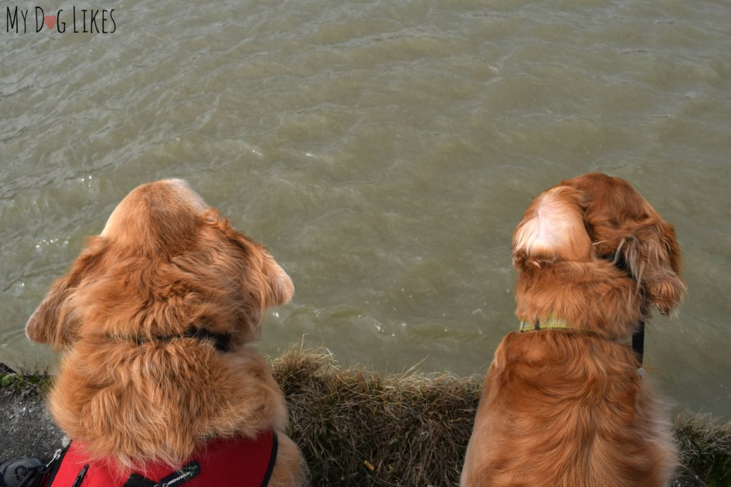 Though there is plenty of water all around, dogs can't swim at Turning Point Park