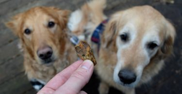 Reviewing Wild Alaskan Salmon for Dogs