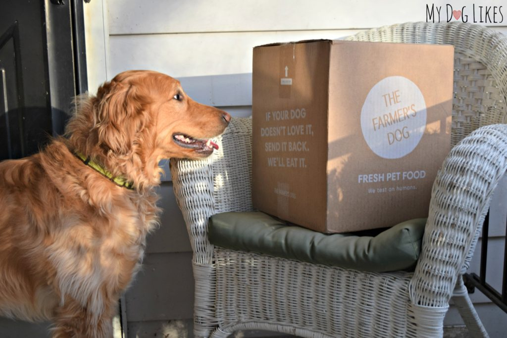 """The Farmer's Dog"" Review - Custom Food Delivered Straight to Your Door"