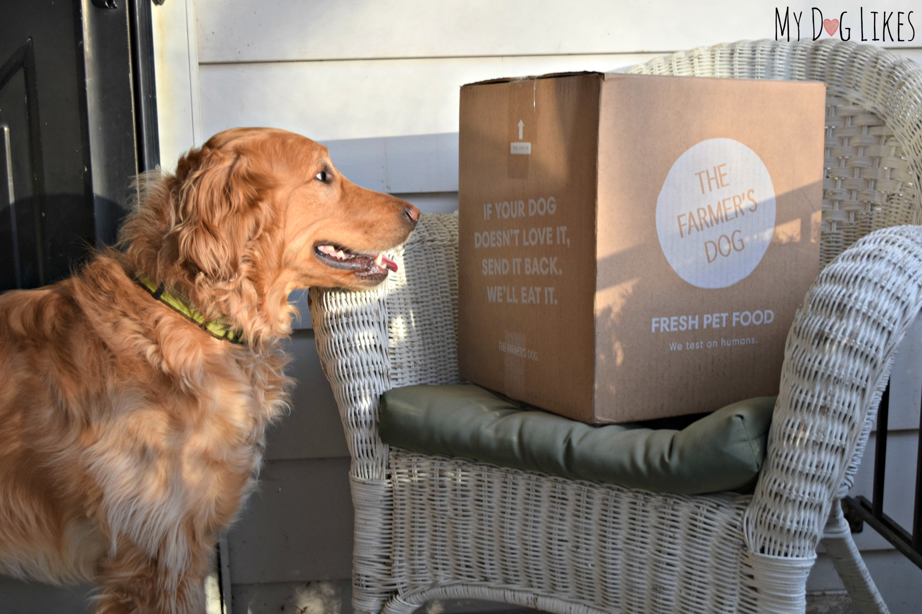 Quot The Farmer S Dog Quot Review Custom Food Delivered Straight