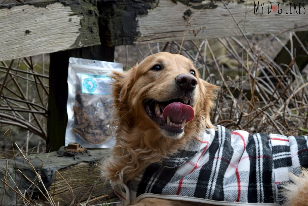 Charlie's smile says it all - these Salmon treats were a huge hit!