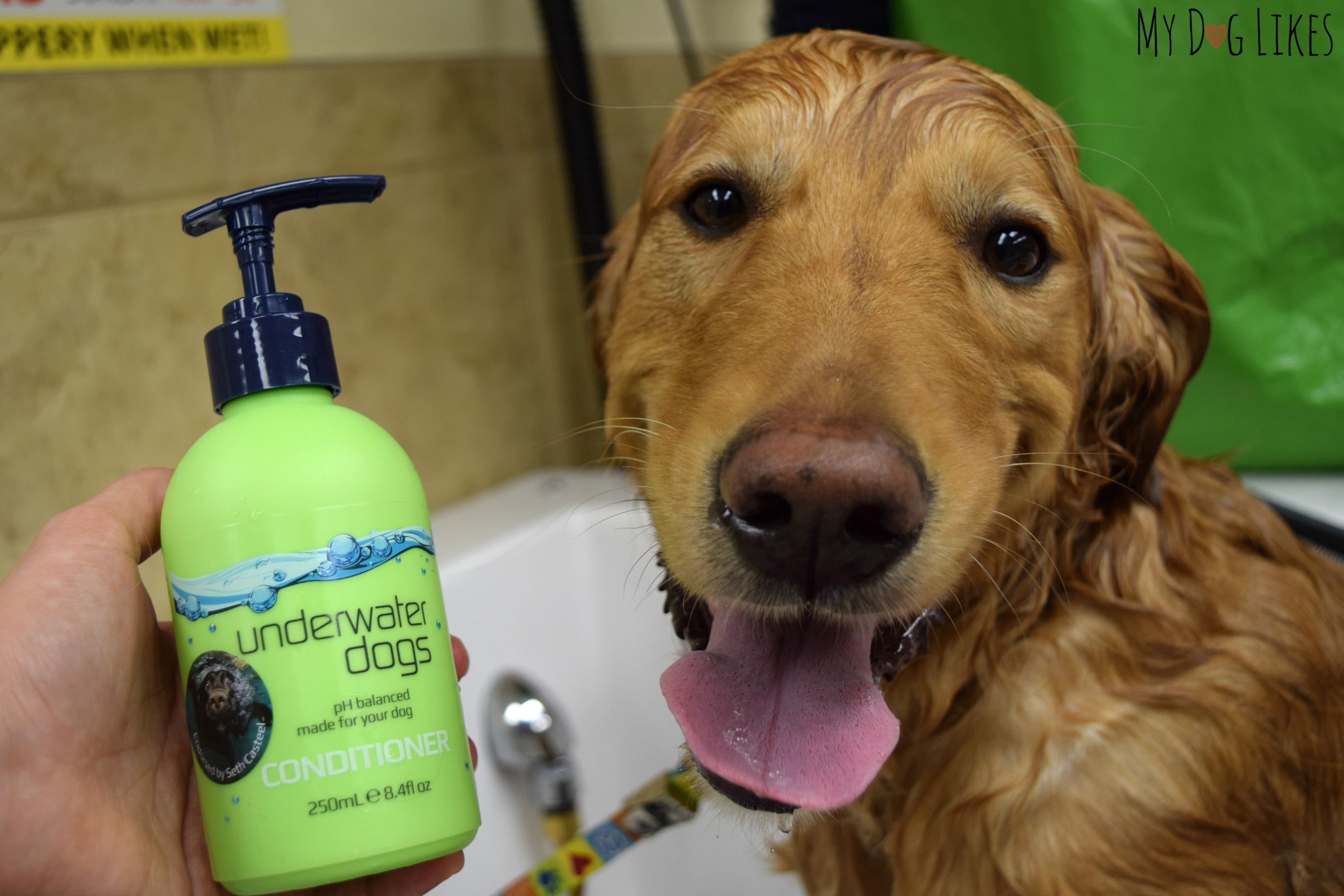 Diving In Deep With Underwater Dogs Grooming Products