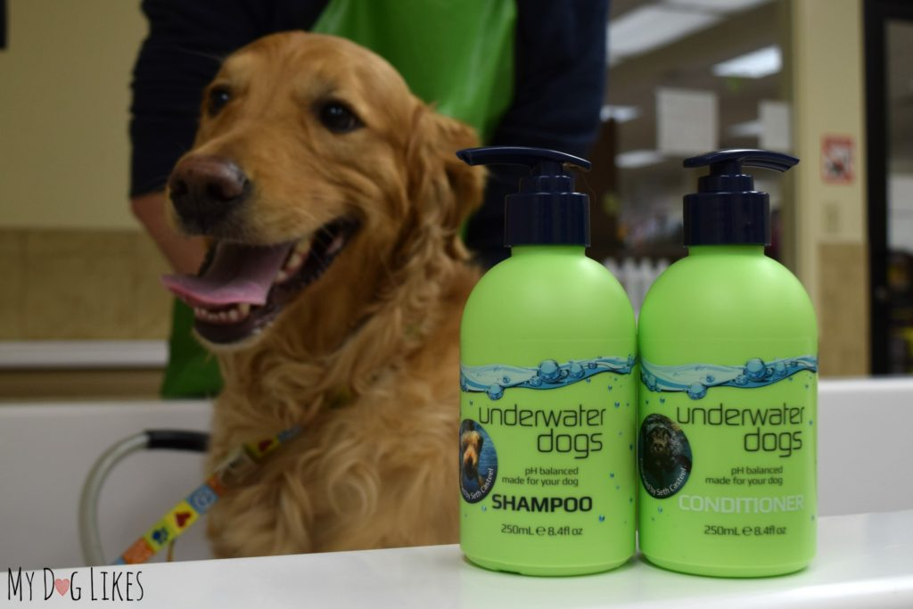 uwdogs, my dog likes, review, underwater dogs, seth casteel, shampoo, conditioner, no-knots, gloss, haircare for dogs, Australia