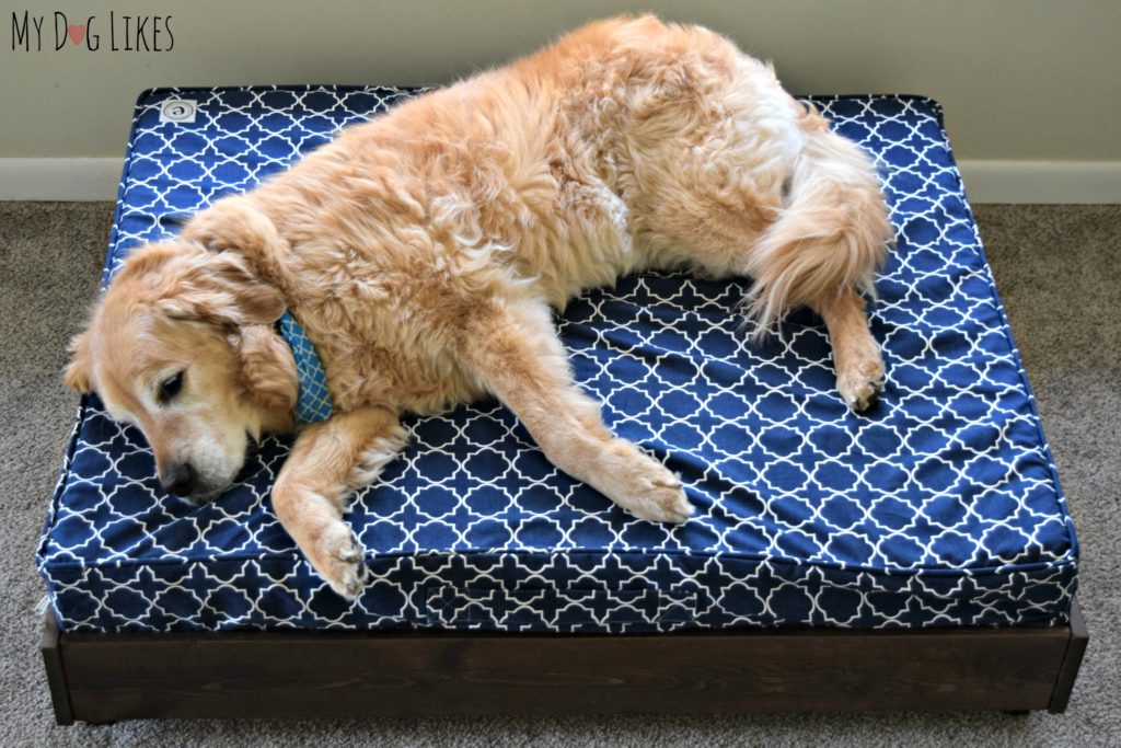 Harley lounging on a large orthopedic dog bed from eLuxurySupply.com