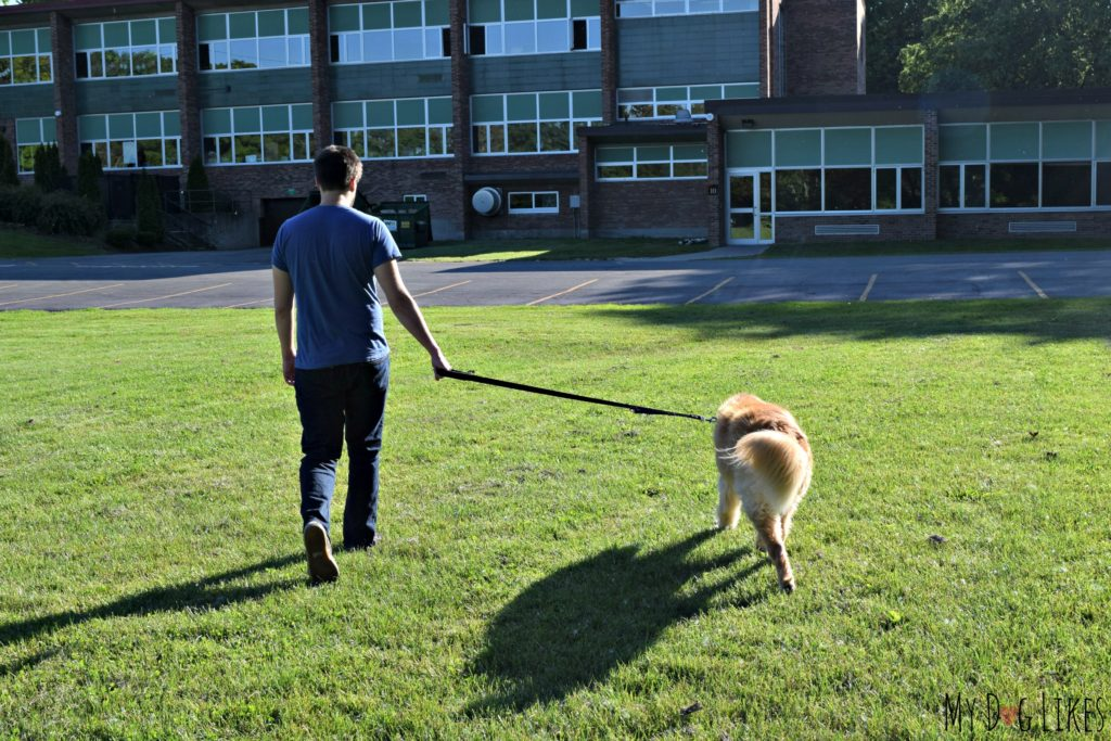 Reviewing the 2 Handle Dog Leash from Lucky & Co.