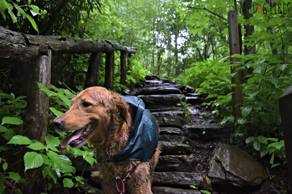 Navigating some of the narrow stone steps along the Crabtree Falls Trail