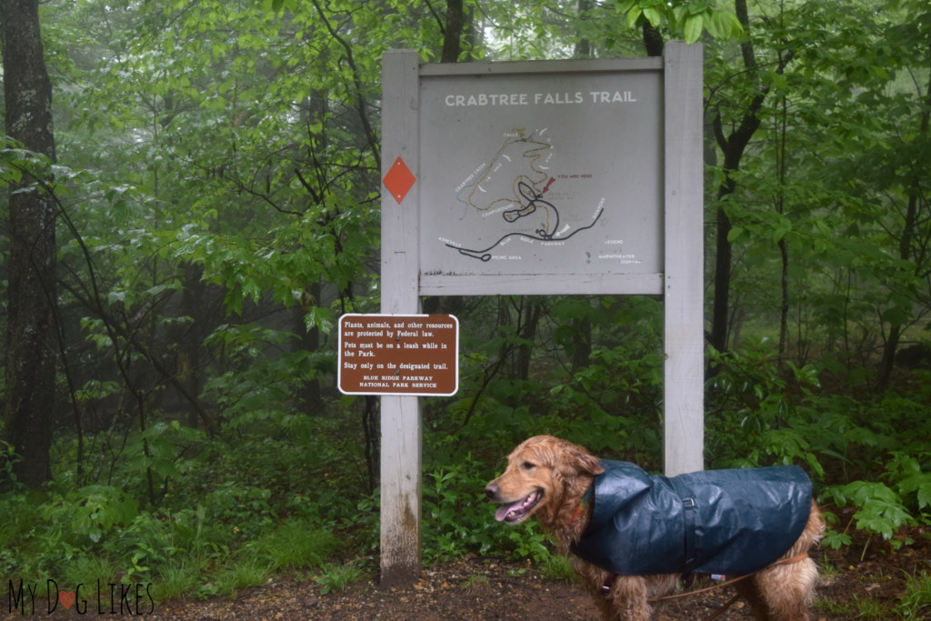 Charlie getting ready for a rainy hike at Crabtree Falls in North Carolina