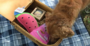 Charlie nosing through our dog picnic basket