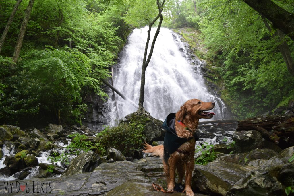 Dog at Crabtree Falls along the Blue Ridge Parkway