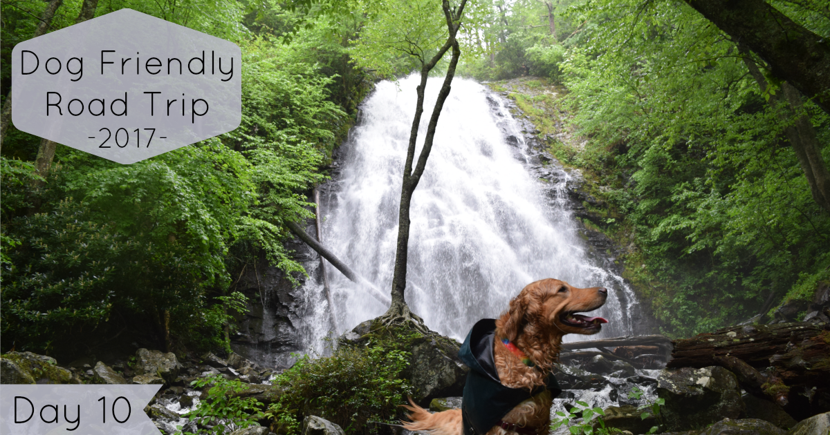 Road Trip Day 10: Dog Friendly Hikes along the Blue Ridge Parkway