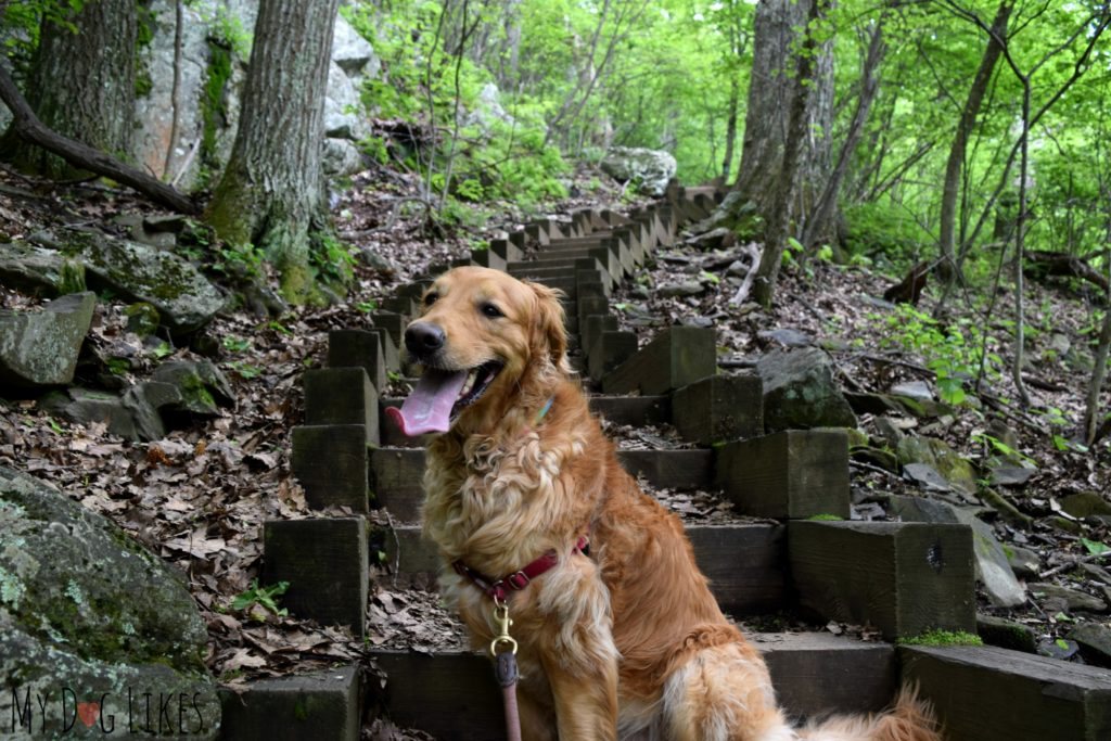 Be prepared to climb on the Humpback Rocks Trail - over both stairs and large rocks!