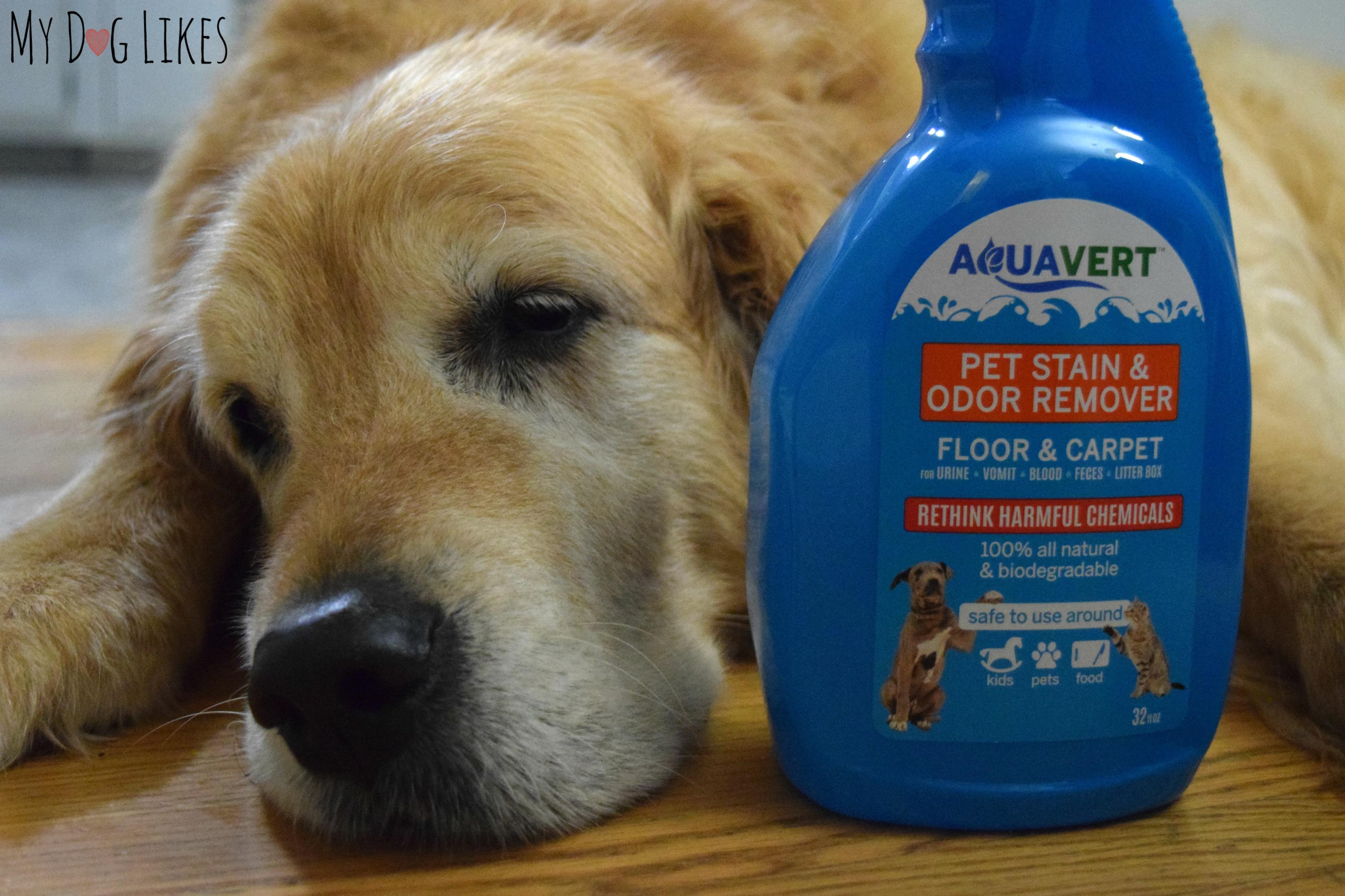 Clean Dog Vomit Sn Out Of Carpet Carpet Vidalondon