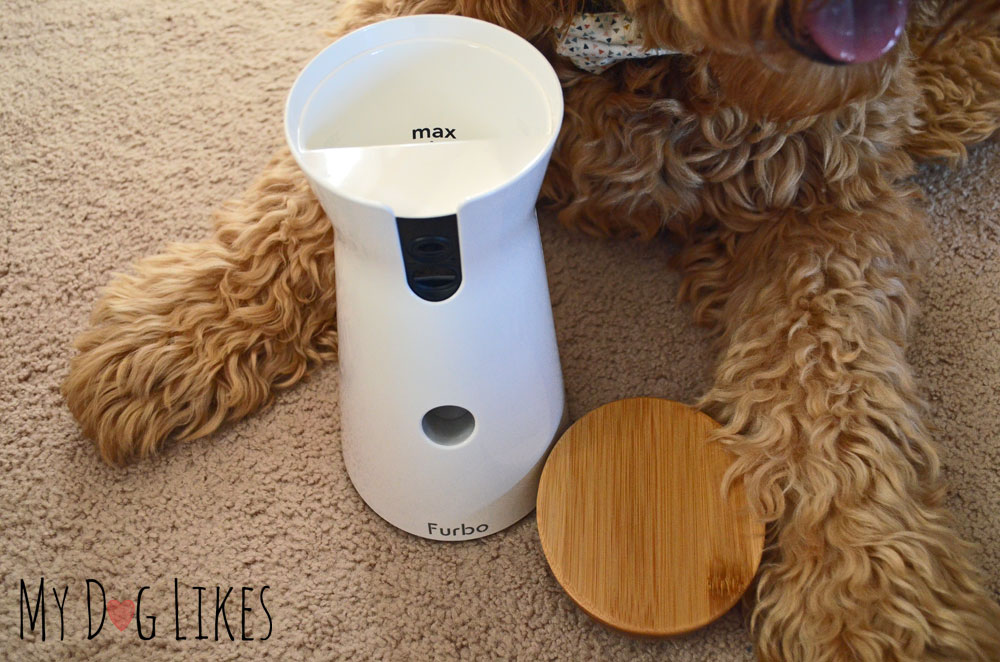 Testing Out The Furbo Treat Dispensing Dog Camera